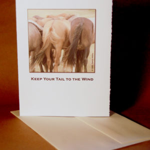 Tail to the Wind card